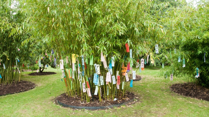 12-Tanabata-