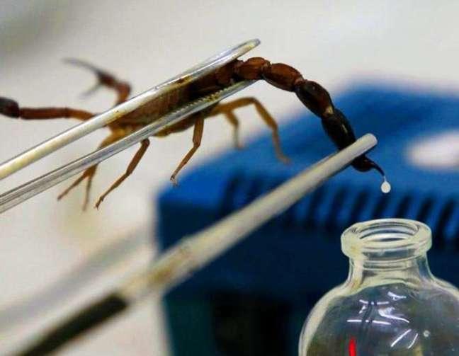 scorpion-venom_1506850568