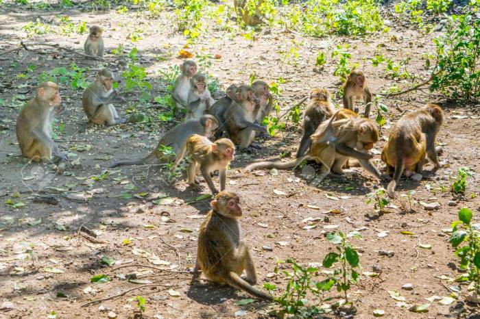 -a-jungle-vietnam-monkey-island.jpg