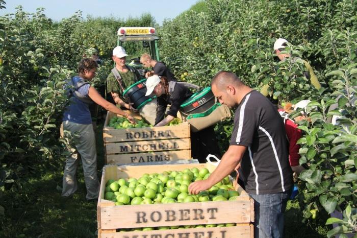 harvest 2012.jpg