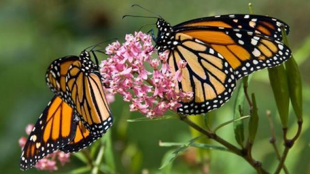 butterfly_1500023542.jpg