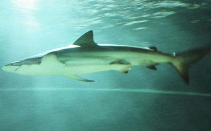fish_shark_species.jpg