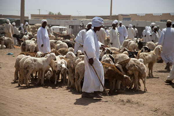 omdurman-camel-market10